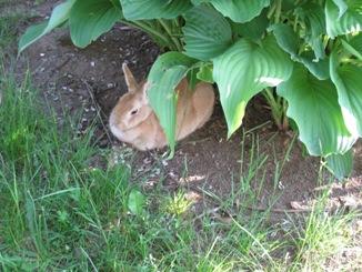 ウサギもいます