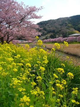 みなみの桜2