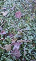 紅葉と霜と白詰草