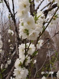 昭和の森初散歩4