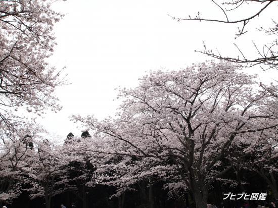 昭和の森初散歩6