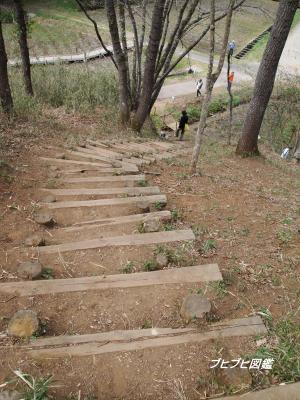 昭和の森初散歩7