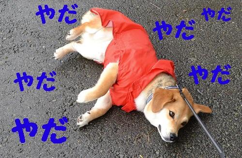 20110529-2_20110529180007.jpg
