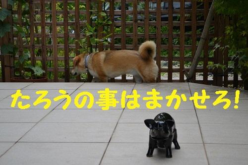 5_20110720213536.jpg