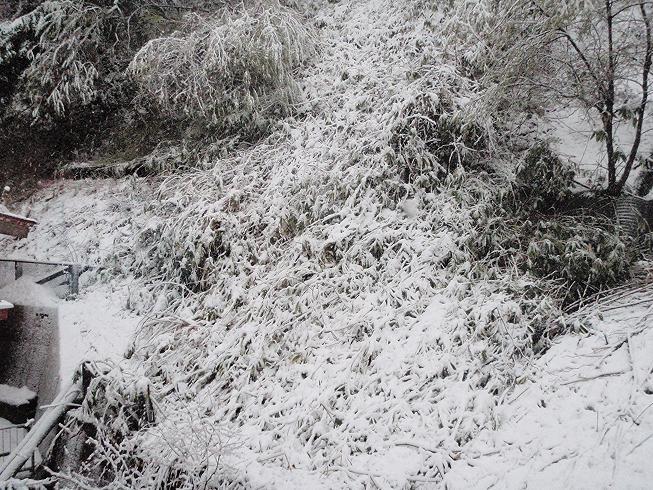 4/26 雪