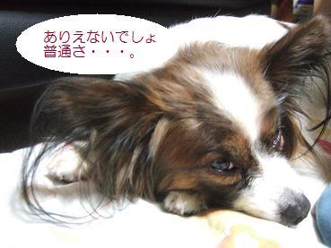 2-11up2_20090212104421.jpg