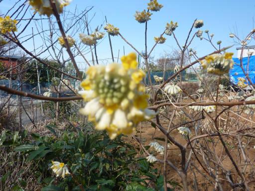 20110312・狭山湖17