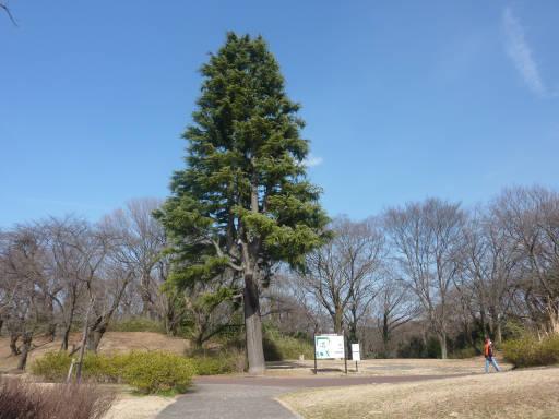 20110312・狭山湖22