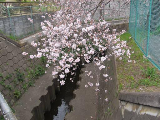 20110409・散歩 02