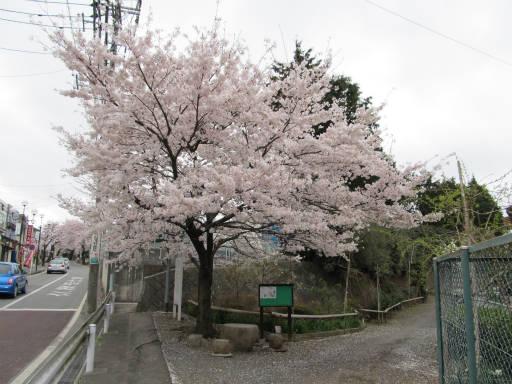 20110409・散歩 01