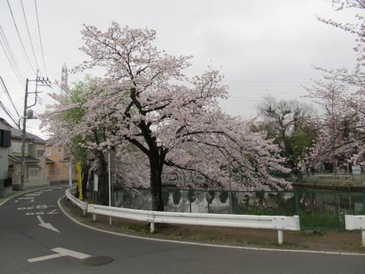 20110409・散歩 18