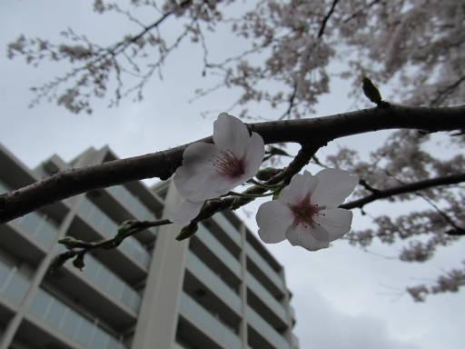 20110409・散歩空 03