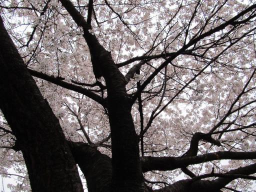20110409・散歩空 01