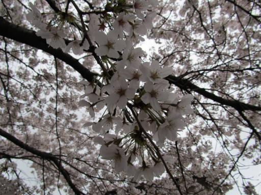 20110409・散歩空 02