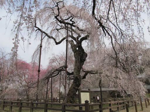 20110411・清雲寺 09