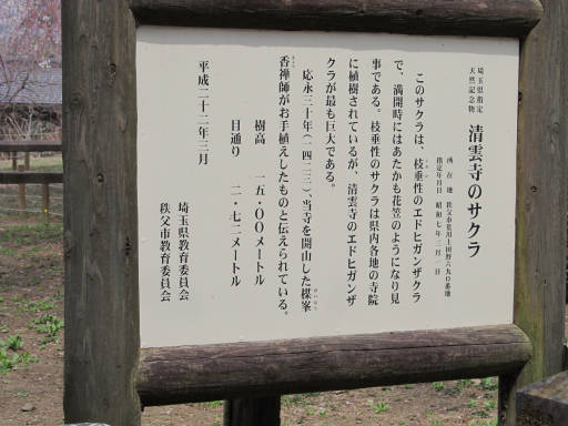 20110411・清雲寺 11