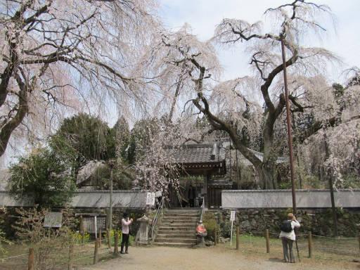 20110411・清雲寺 14