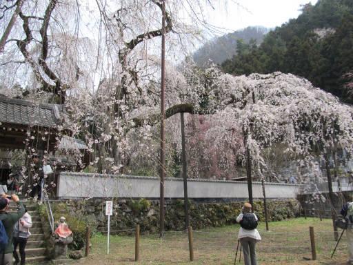 20110411・清雲寺 13