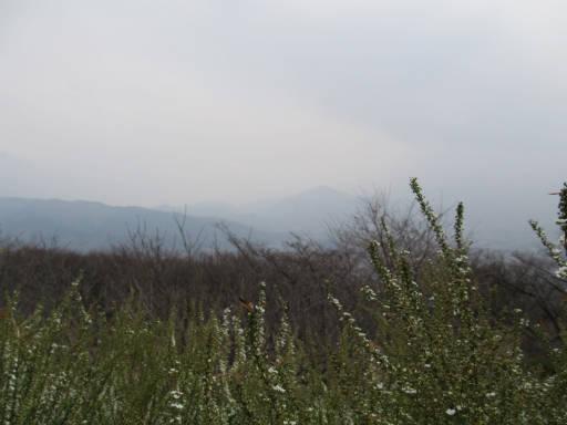 20110411・美の山 07
