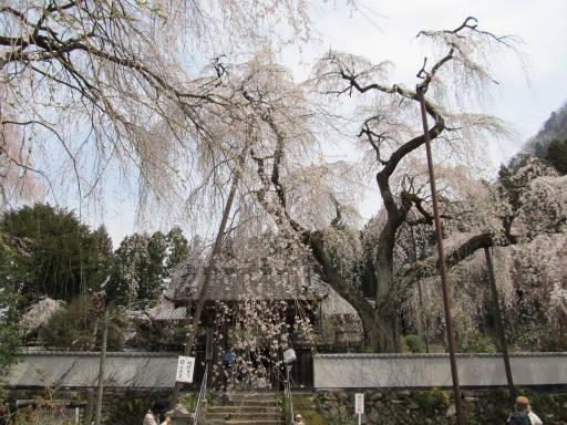 20110411・空 04・清雲寺