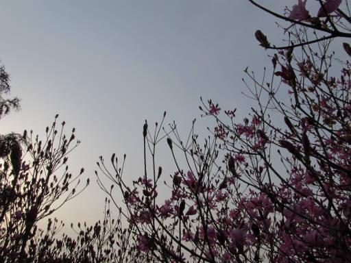 20110411・空 12・岩根山