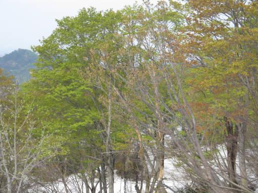 20110515・菖蒲高原上部06