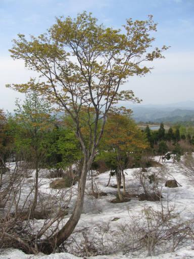 20110515・菖蒲高原上部08