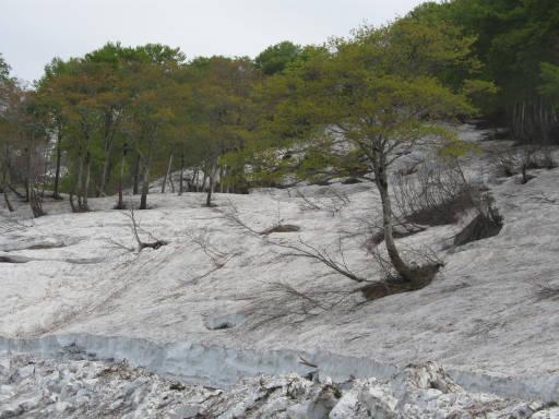 20110515・菖蒲高原上部17