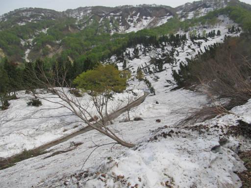 20110515・菖蒲高原上部14