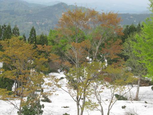 20110515・菖蒲高原上部23