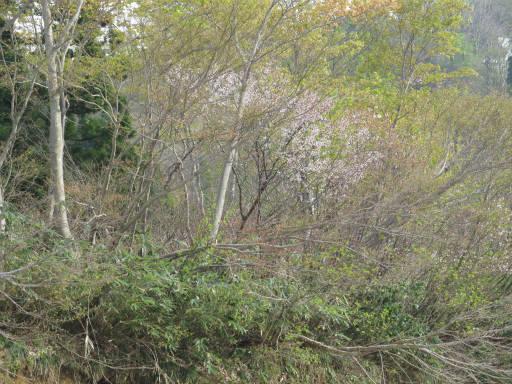 20110515・大厳寺03