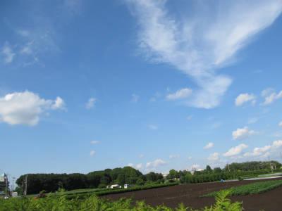 20110524・空・小手指が原花畑08