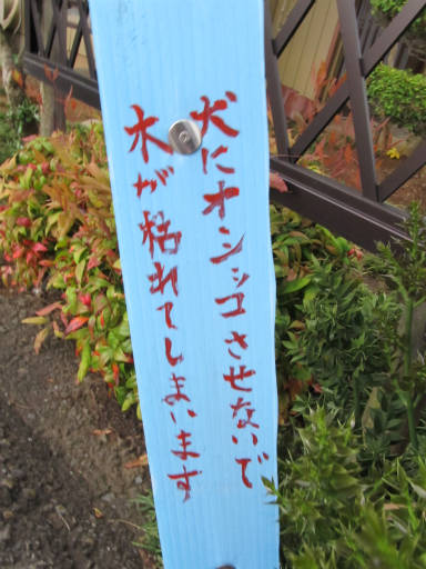 20110522・荒幡富士散歩05