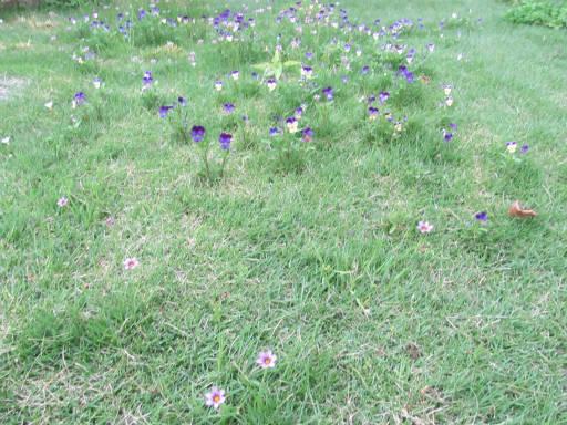 20110522・植物探し16-1