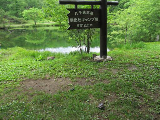 20110626・駒出池カメさん04