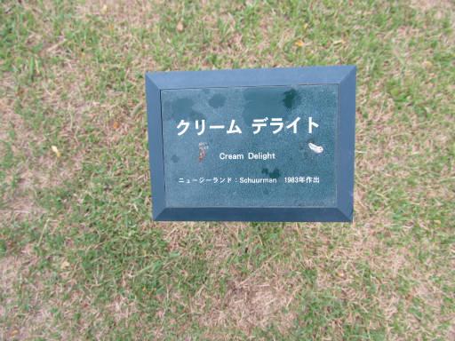 20110625・敷島公園ばら園のバラ01-1