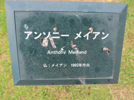 20110625・敷島公園ばら園のバラ05-1