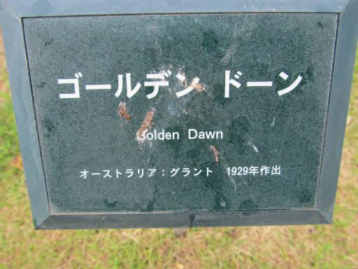 20110625・敷島公園ばら園のバラ07-1
