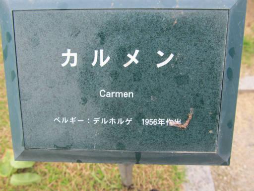 20110625・敷島公園ばら園のバラ08-1