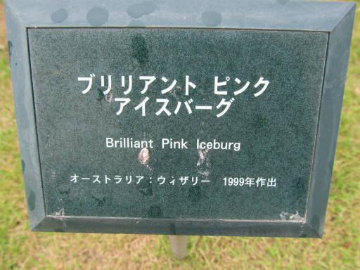 20110625・敷島公園ばら園のバラ06-1