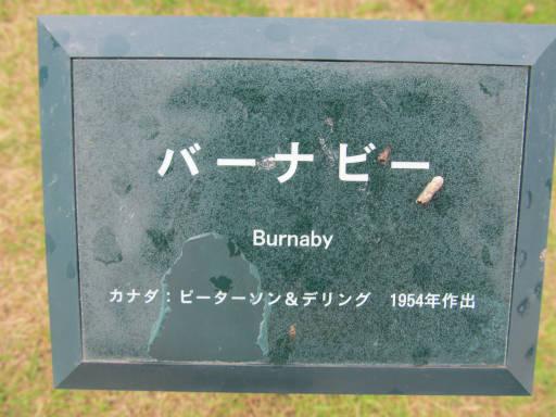 20110625・敷島公園ばら園のバラ09-1