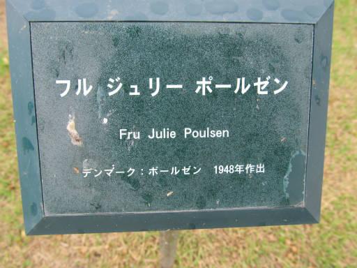 20110625・敷島公園ばら園のバラ11-1
