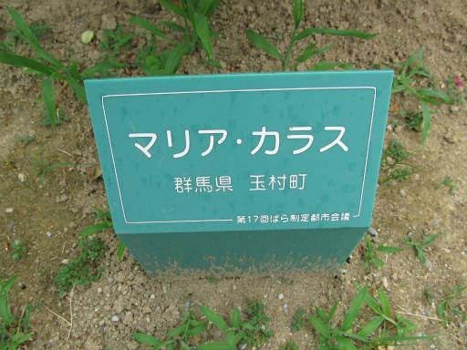 20110625・敷島公園ばら園のバラ26-1