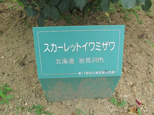20110625・敷島公園ばら園のバラ24-1