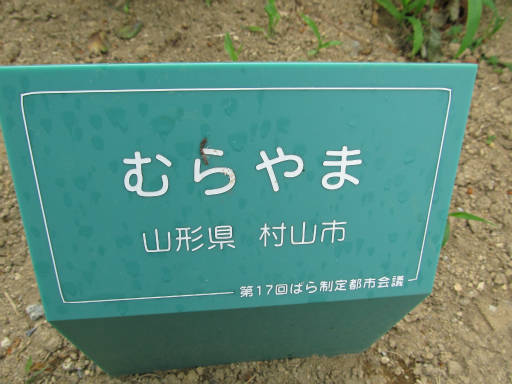 20110625・敷島公園ばら園のバラ25-1