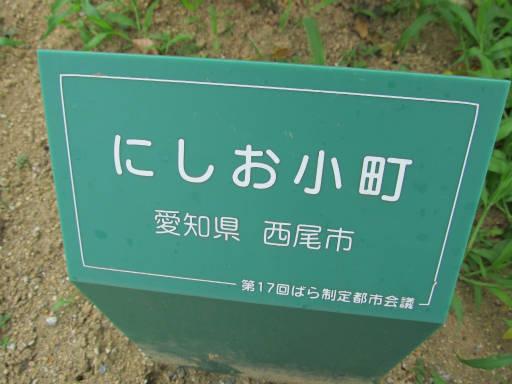20110625・敷島公園ばら園のバラ30-1