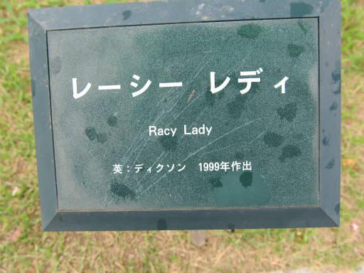 20110625・敷島公園ばら園のバラ34-1