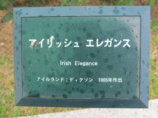 20110625・敷島公園ばら園のバラ39-1