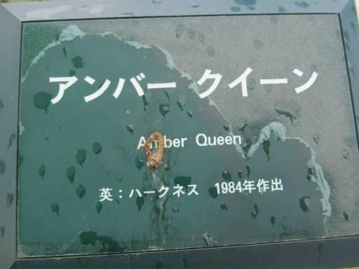 20110625・敷島公園ばら園のバラ37-1