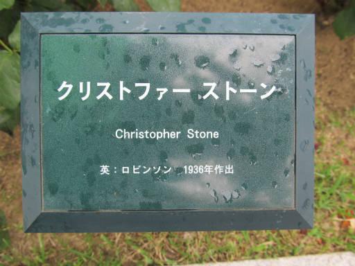20110625・敷島公園ばら園のバラ41-1